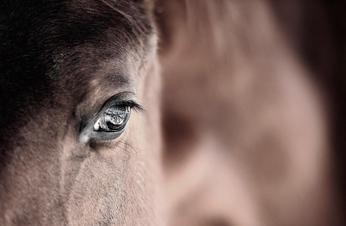 Pferde Haltung Zucht