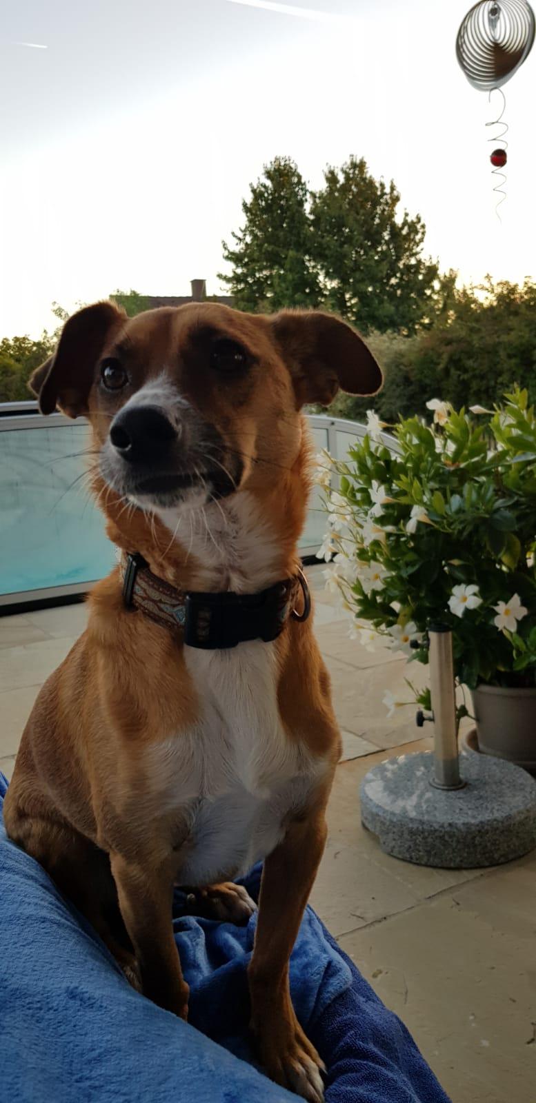 Zeolith online kaufen - fuer Hunde