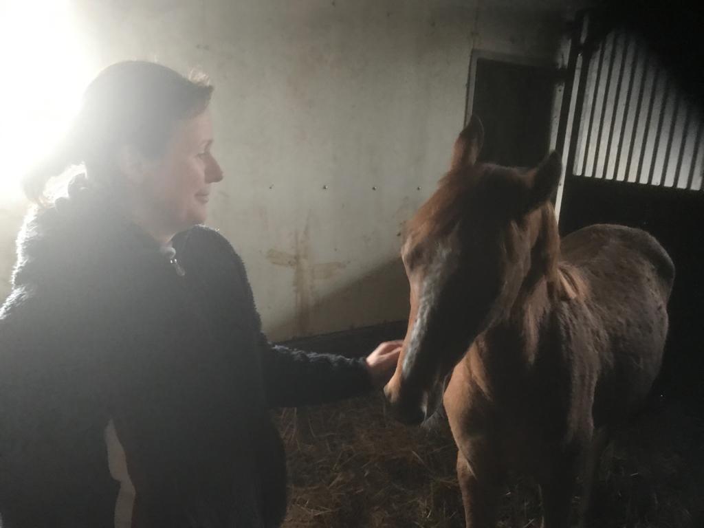 STEINKRAFT Kunden und deren Pferde lieben die Zeolith Pellets.jpg