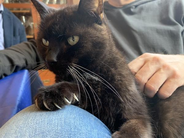 Zeolith für ältere Katzen - Steinkraft